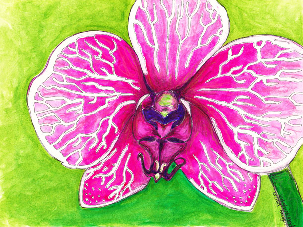 orchid pen + watercolor illustration